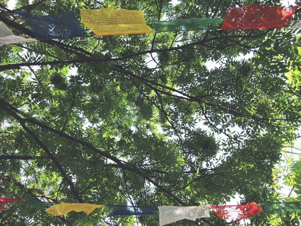 Premiers pas dans la prière avec Notre Dame du web Flags-1209306_1920-1040x780
